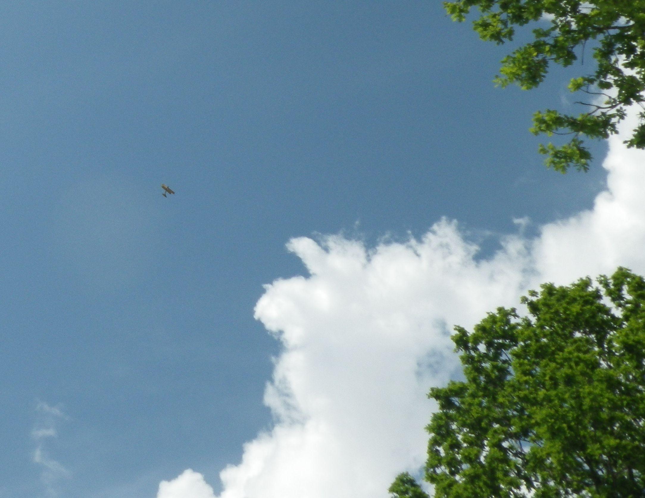Små så de knappt syns i luften, men de hörs och har man tur får man se dem bland trädtopparna!